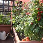 Idée d'aménagement d'un potager sur votre balcon