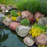 aménager un bassin de jardin